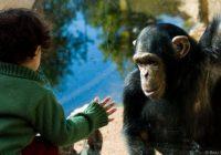 ধরণ দিয়ে বাছাই করুন তারিখ দিয়ে বাছাই করুন মিডিয়া অনুসন্ধান করুন সংযুক্তির বিবরণ সংরক্ষিত two-and-a-half-year-old-chimps-and-humans-have-similar-mental-capacities photo